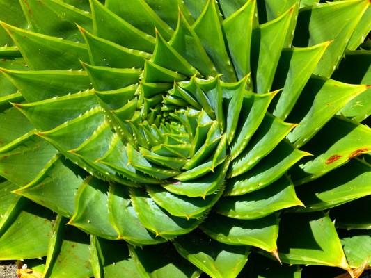 Aloes korzystny dla zdrowia jamy ustnej – poznaj jego właściwości