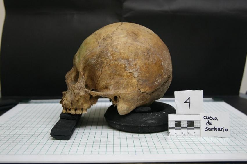 Kamień nazębny zdradził dietę pierwszych rolników sprzed 8,5 tys. lat