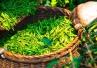 Miswak i zielona herbata - nowy sposób na płytkę nazębną