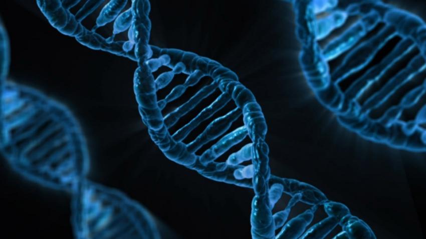 DNA bakterii z jamy ustnej pod lupą amerykańskich naukowców