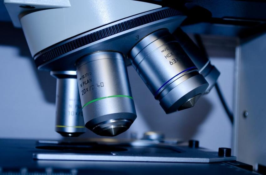 Promieniowce mogą hamować rozwój cukrzycy