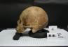 Dieta neandertalczyków znana dzięki kamieniowi nazębnemu