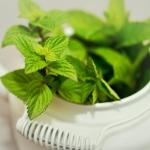 zielona herbata - Dentonet.pl