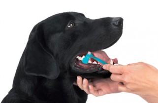 pies i dentysta 1