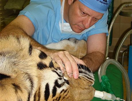 Dentysta dzikich zwierząt