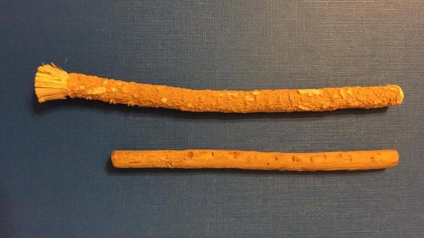 Miswak – naturalna szczoteczka do zębów z drzewa arakowego