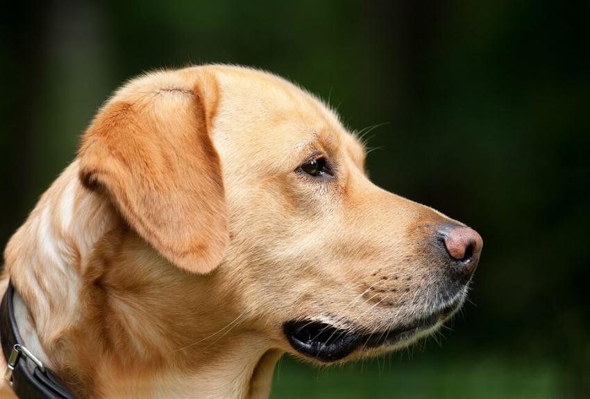 Niepełnosprawne dzieci i… psy w gabinecie stomatologicznym