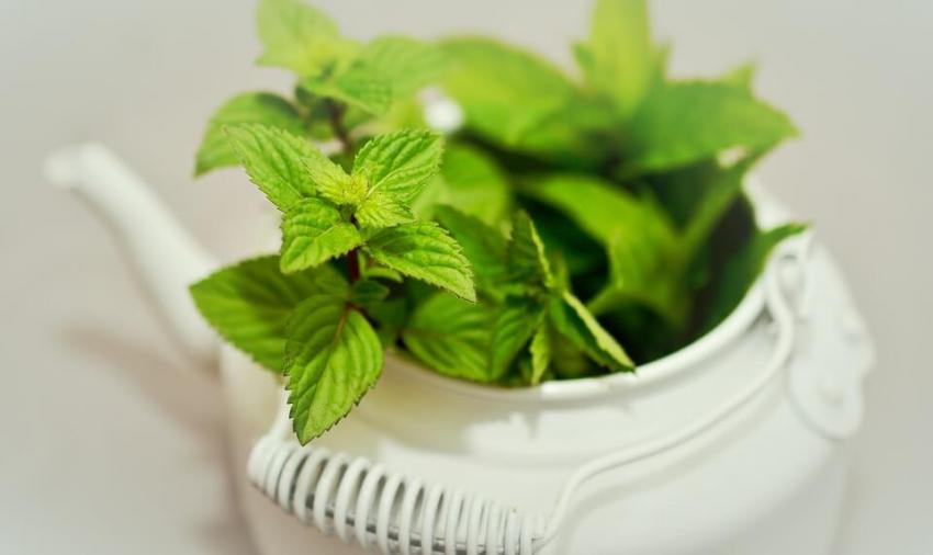 Zielona herbata skuteczna w terapii nadwrażliwości zębów