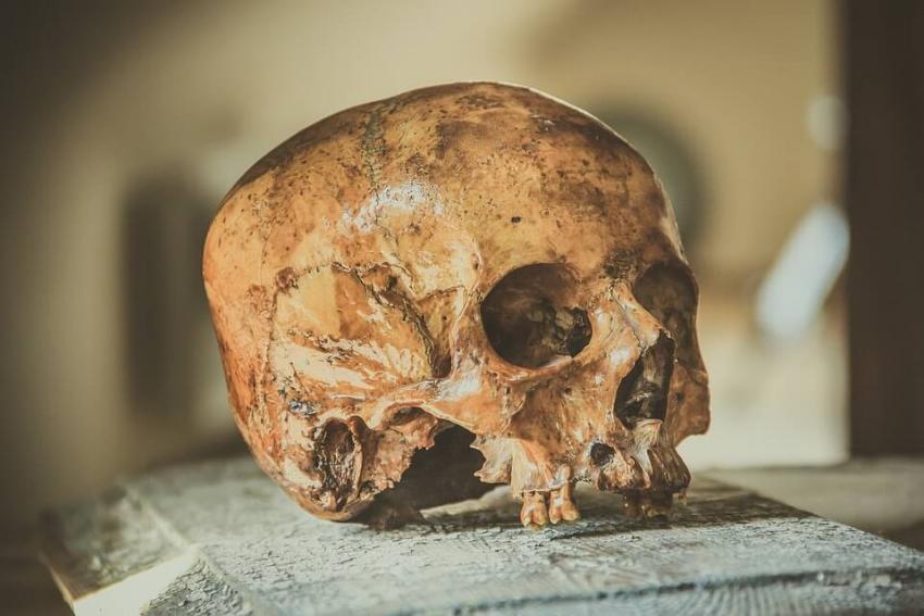 Odkryto zęby nieznanego gatunku człowiekowatych