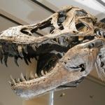dinozaury - Dentonet.pl