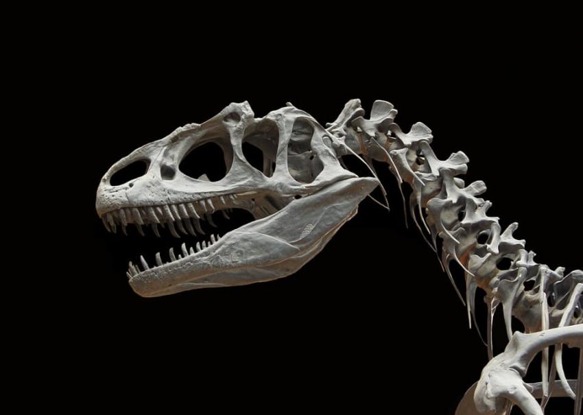 """""""Historical Biology"""": cynodont opisany dzięki pozostałościom zębów"""