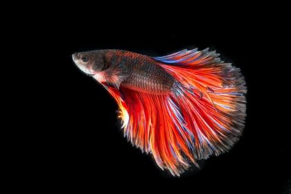 Niektóre gatunki ryb mają… giętkie zęby