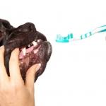 fluor nie dla psów