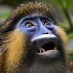 zęby małpy