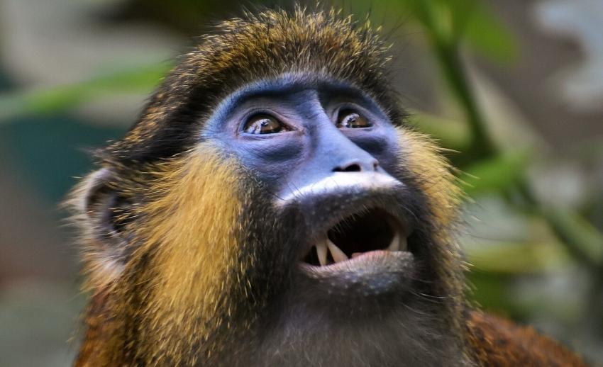 Kenia: skamieniały ząb małp wymarłych 12 mln lat temu