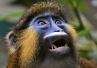 Cenny ząb małpy sprzed 12 mln lat