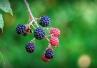 Rośliny receptą na superbakterie?