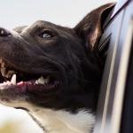 dog-1149964_960_720