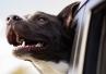 Choroby przyzębia u ponad 80% ... psów. Powodem - zbyt twarde zabawki