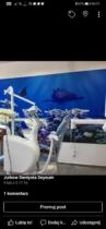 Praca dla dentysty 10tys