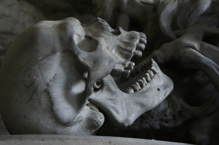Szczęka z plejstocenu z nietypowym starciem zębów